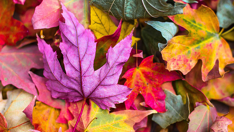 Destinos para conhecer no outono